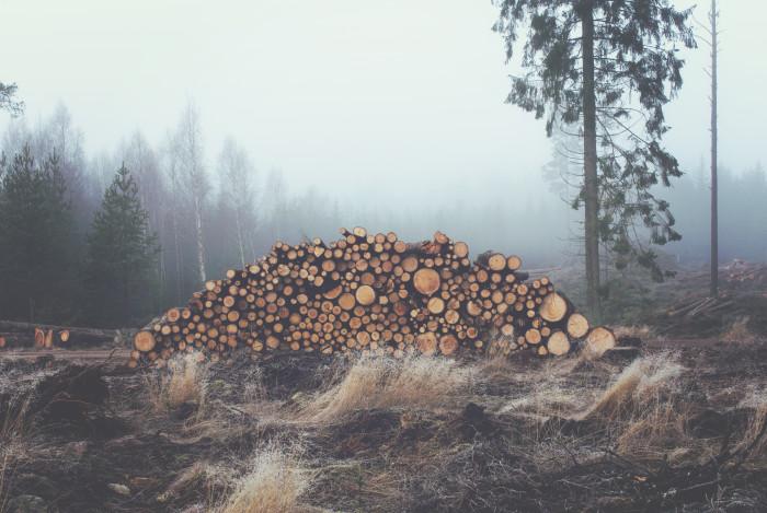 Clear-cut Trees